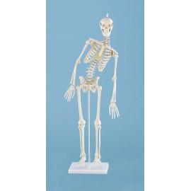 Esqueleto, colunma vert. flexible y decoración. (EM-15P)